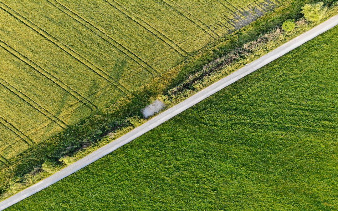 Pennyfuel: proyecto de investigación para la generación de biodiésel a partir de variedades vegetales autóctonas